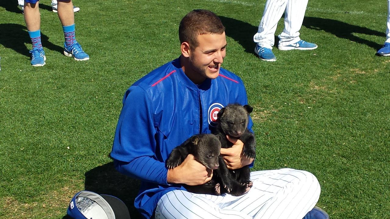 Los Cubs reciben la visita de auténticos cachorros en Arizona