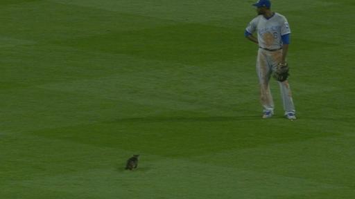 Cat runs by Cain